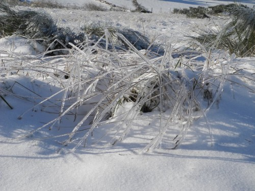 Début d'hiver sur le Larsac-0011
